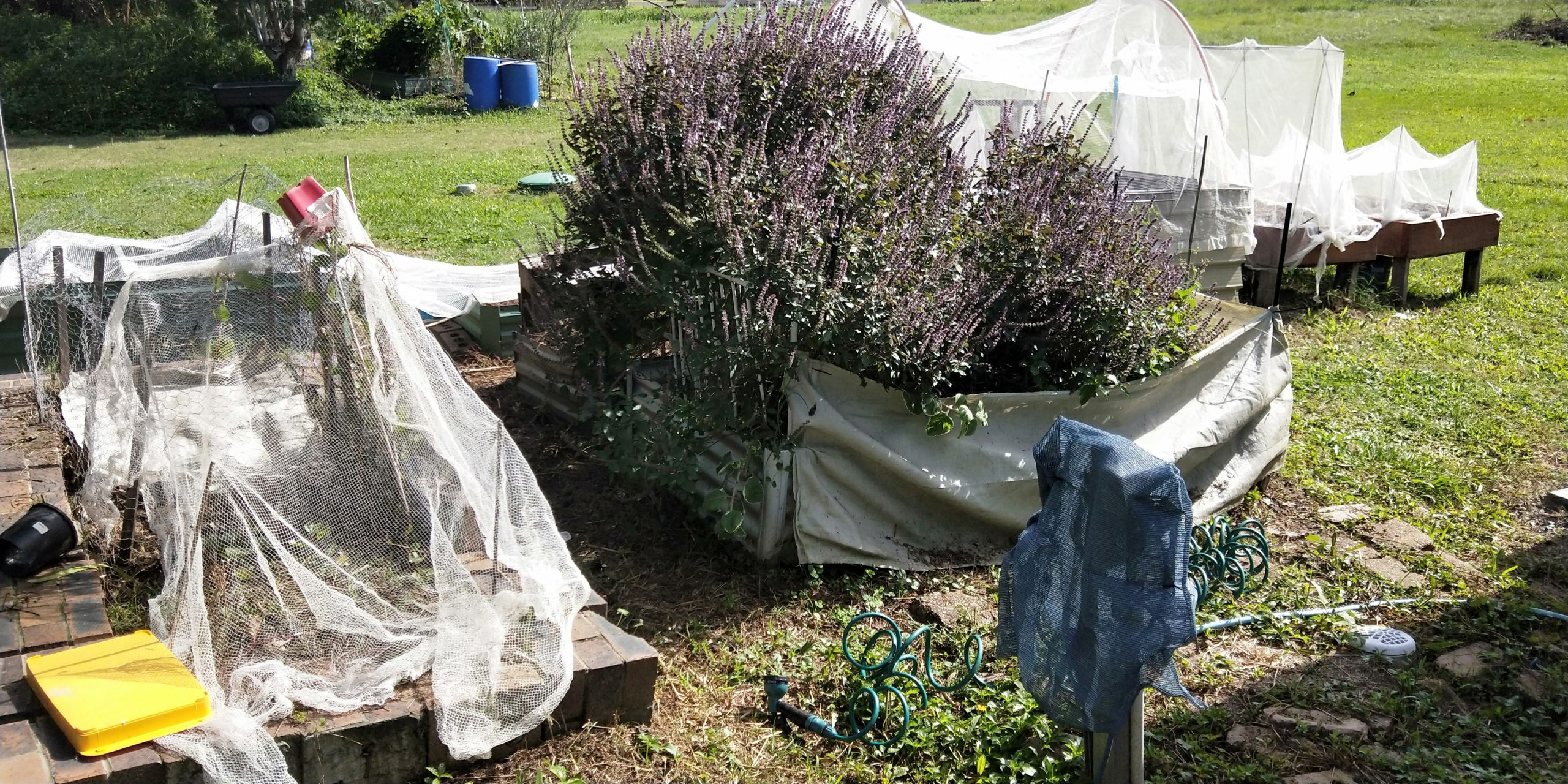 From total novice gardener to knowing a bit more ? Part 2